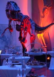 Frankfurt: Dinner unter Dinos im Senckenberg Naturmuseum