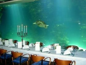 Stralsund: Weihnachtsfeier mit Meeresschildkröten und Haien