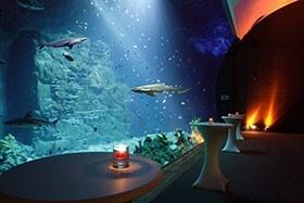 Location Hamburg: Tierisch tropisches Weihnachtsspecial im Tropen-Aquarium Hagenbeck